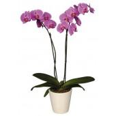 Květináče na orchideje