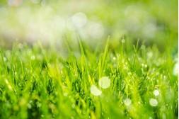 Trávník na jaře