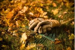 Podzimní rady do Vaší zahrady I.